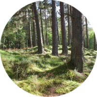 Planting_A_Tree_medium